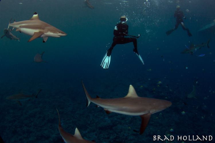 Margo diving above two blacktips.