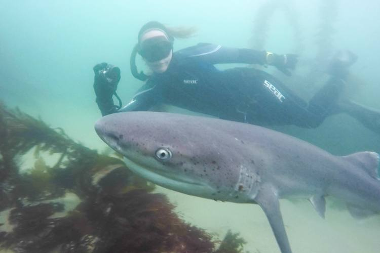 Freediving with seven gills near turtle town.