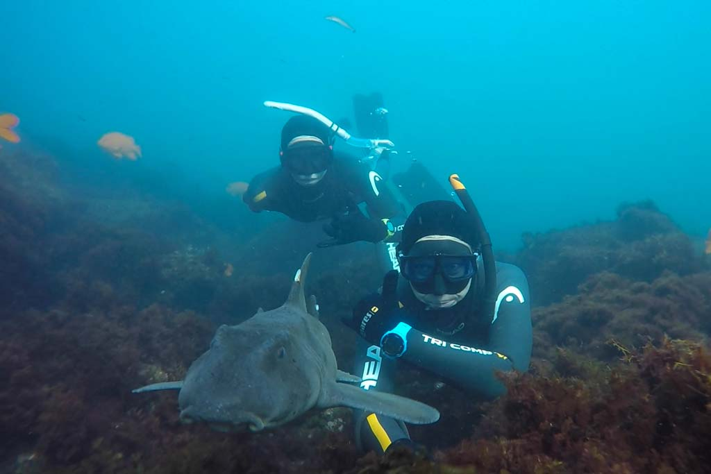 SDG freediving with horn shark.