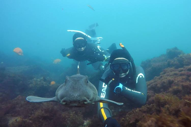 Fun with horn sharks in La Jolla.