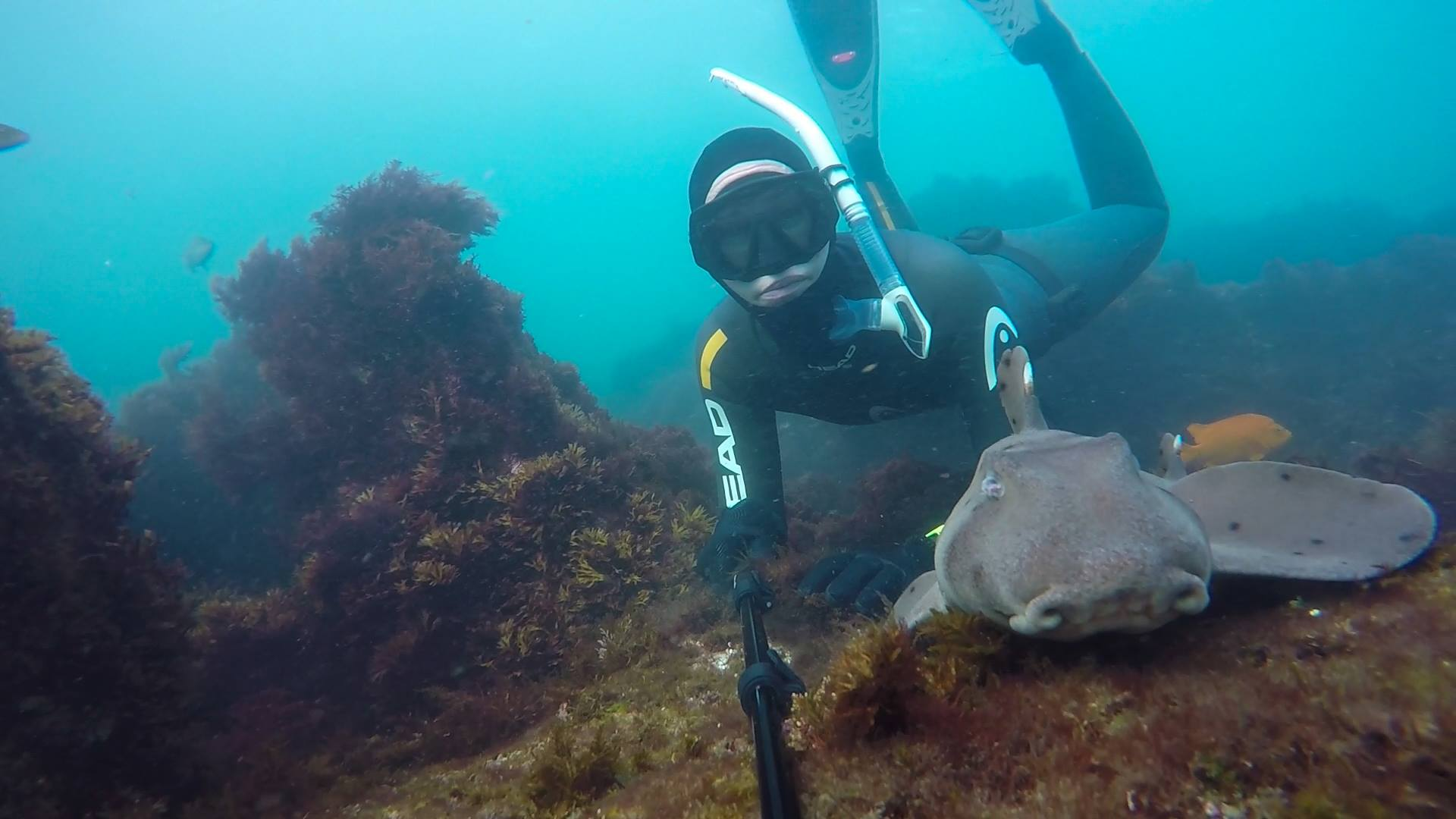 Diving with horn sharks in La Jolla.
