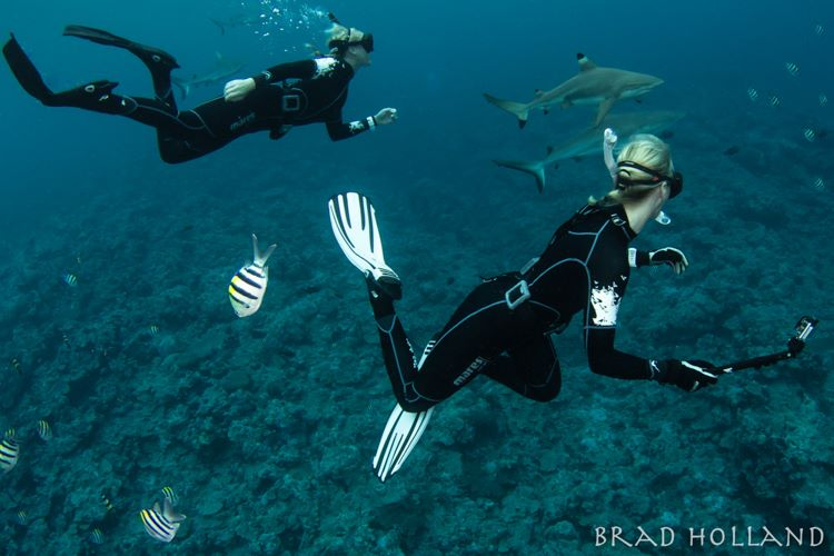 Great excursion with blacktip sharks in Yap.