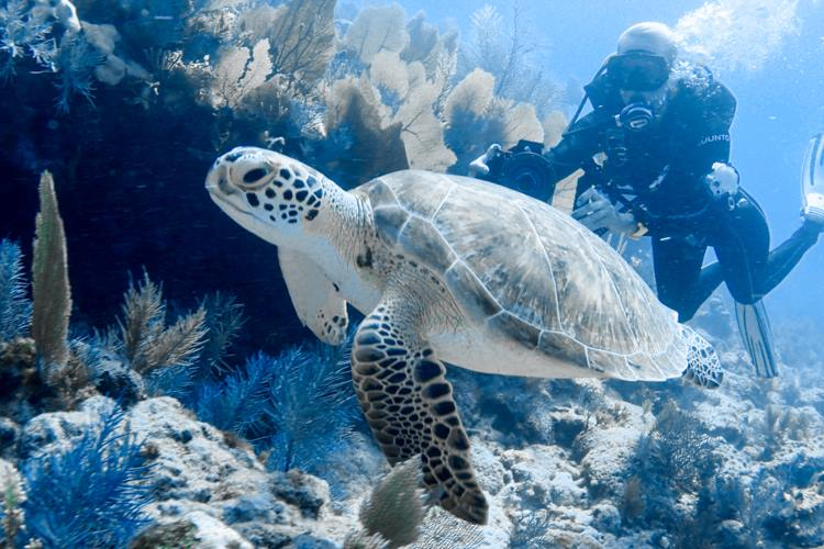Diving with sea turtle in Key Largo.