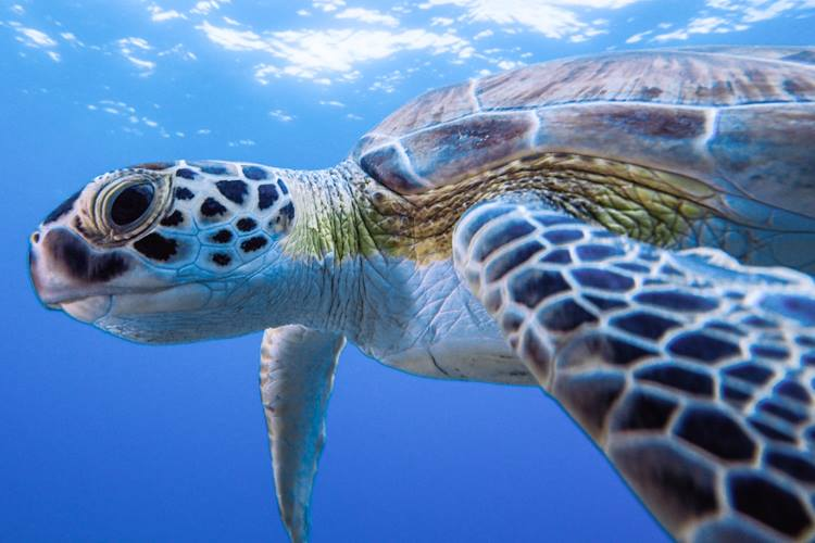 Photo from under a sea turtle.