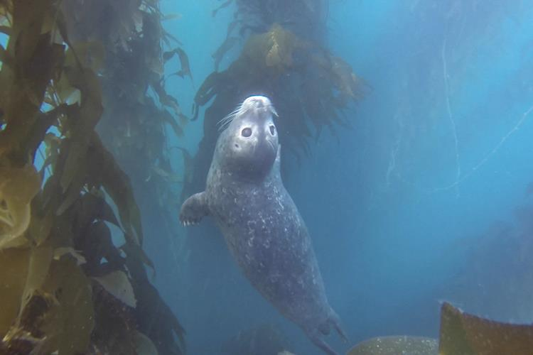 Scuba with seal in La Jolla.