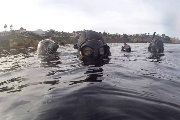 Seal behind Stephanie at La Jolla Shores.