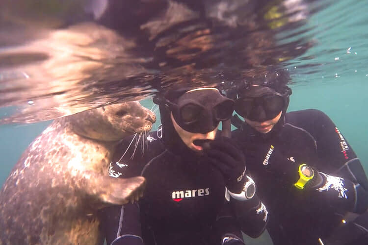 San Diego snorkel with seals.
