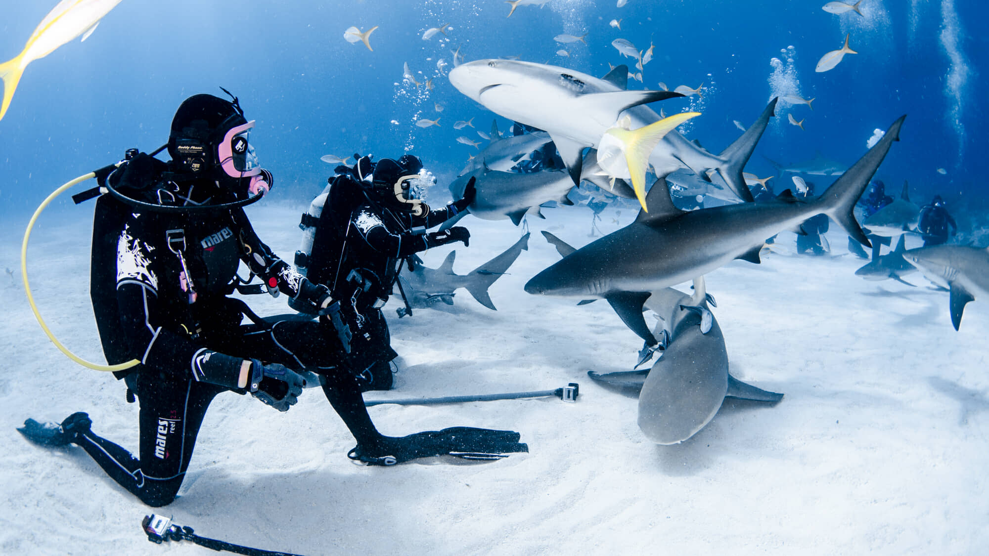 Photographing sharks on recent Bahamas trip.
