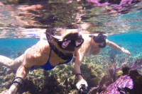 Isla Mujeres coral reef snorkel