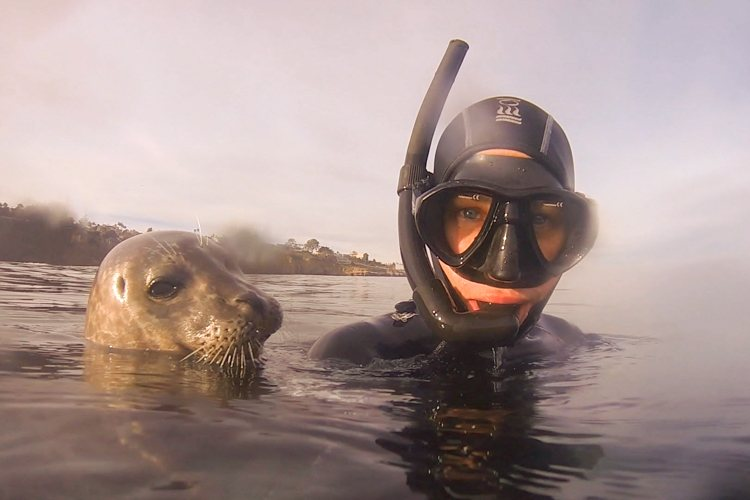 Snorkel with seals in the Boomer's kelp.