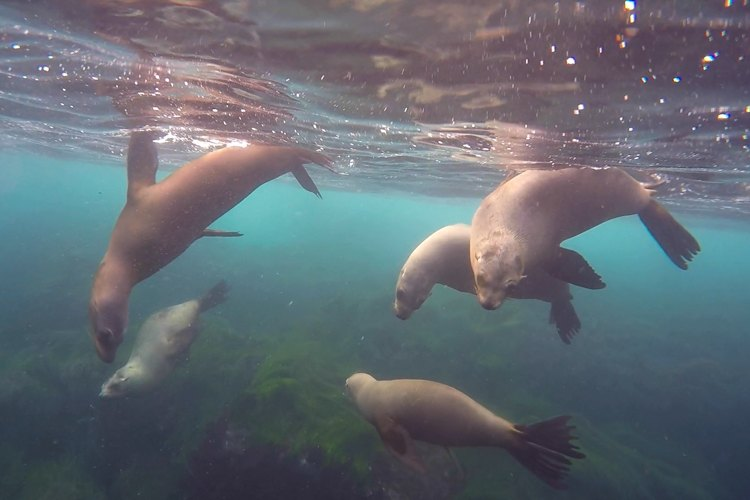 Sea lions in San Diego.