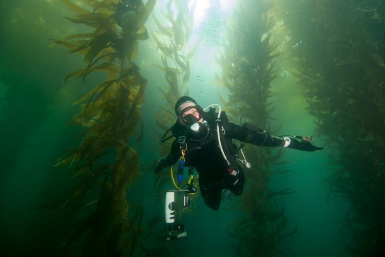 Margo diving in giant kelp forest.