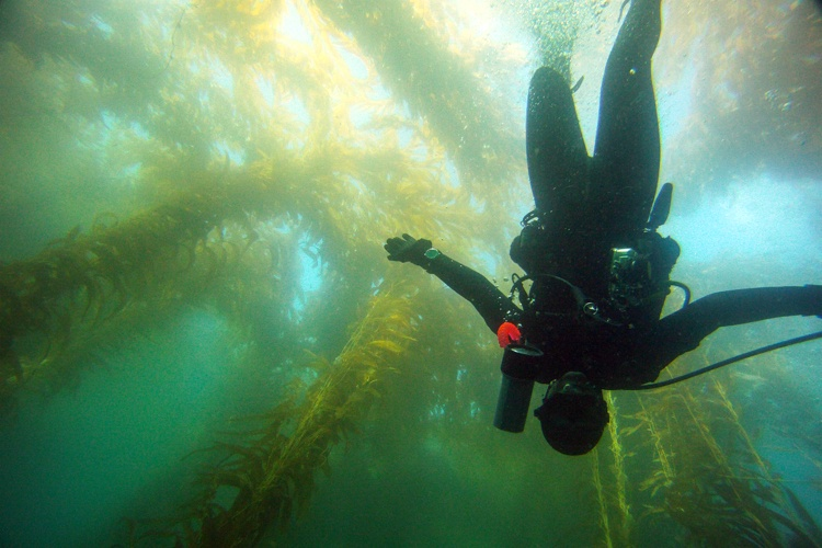 Kelp forest diving.