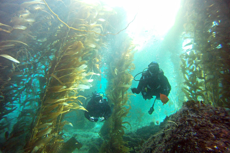 La Jolla Cove scuba diving tours.