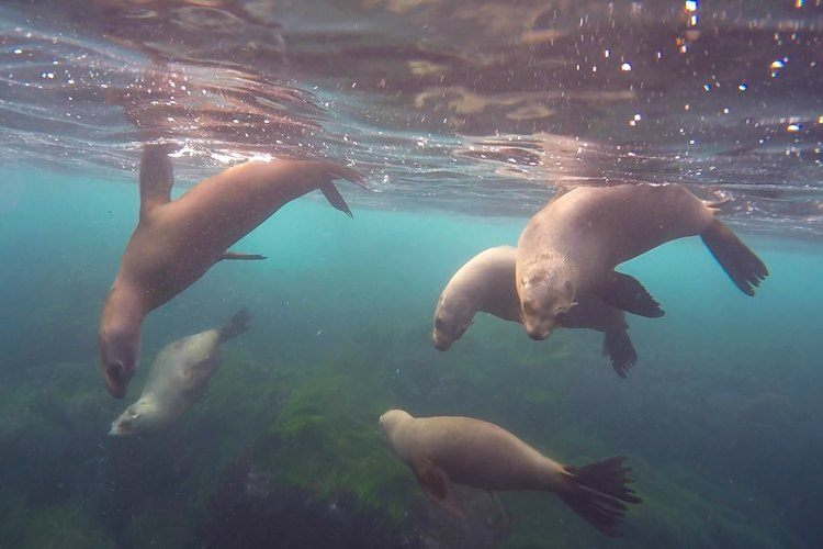 Diving with sea lions below San Diego cliffs.